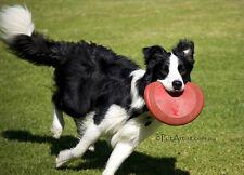 Kong Flyer (frisbee) pour chien 24 cm