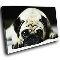 A088 Grey Black Pug Dog White Funky Animal Canvas Wall Art Large Picture Prints