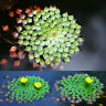 20Pcs Aquarium Aquatic Plant Ludwigia Sedioides Seeds Garden Fish Tank Decor l