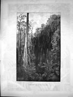 Original Old Antique Print Sassafras Gully Black Spur Forest Trees Mountains