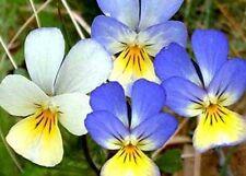 150 Semillas Viola x Joker (Pensamiento) Código 559