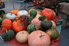 Pumpkin-35 MIXED SEEDS FROM OVER 150 HEIRLOOM VARIETIES. ALL UNCOMMON VARIETIES.
