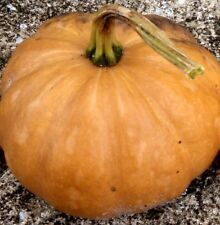 HEIRLOOM SEMINOLE Pumpkin WINTER SQUASH SEEDS 20 Fresh Seeds