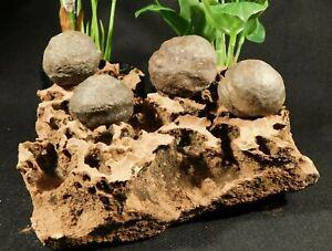 FOUR! Moqui Marbles on a Natural Navajo Sandstone Formation Utah 1535gr