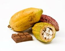 Cacao fruit - Fresh. *FREE UK POSTAGE* Buy Bulk Save. From Ecuador & St Lucia