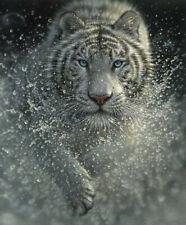 On Safari White Tiger, Large Digital Print Cotton Fabric Panel by Riley Blake