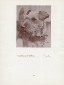 LAKELAND TERRIER HEAD STUDY OLD VINTAGE 1934 NAMED DOG PRINT PAGE