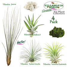 4 X named Air plants (Tillandsia) + free Reindeer moss.House plant Value!