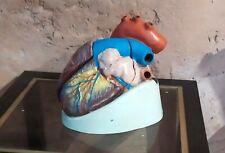 Coeur Modèle Anatomique Ancien vintage  Écorché Cabinet Curiosité  3 parties