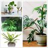 100 PCS Seeds 12 Kinds Mix Bonsai Philodendron Grape Leaf Plants Tree Garden NEW