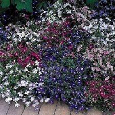 Lobelia Seeds Riviera Mix 50 Multi Pelleted Seeds Garden Starts