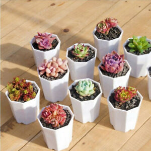 10x Small White Patio Pottery Pot Succulent Flower Plant Planter Home Office