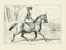 VICTORIAN HORSEWOMAN RIDING SIDESADDLE EQUESTRIAN ART ANTIQUE HORSE PRINT 1873
