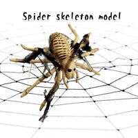 LD_ CN_ Halloween Table Decorations Creepy Skeleton Spider Props Favours Party