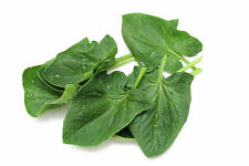 Botanikka Seeds Baby Spinach 1 OUNCE ITALIAN Matador 3400+ SEEDS.Grow in 37 days