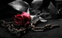 Framed Print - Gothic Red Rose Laying on a Old Dirty Chain (Picture Poster Art)