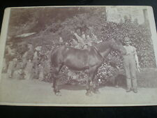 Cdv Cabinet old photograph man with horse c1890s