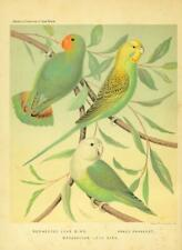 53 Vintage Cage Bird Books - On 1 Dvd