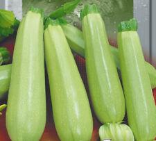 Кабачок Грибовский Zucchini Gribovskiy Seeds, Samen2
