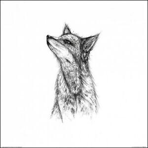 Renards - Fox, Sofie Rolfsdotter Poster Affiche D`Art (40x40cm) #99120