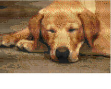 CROSS STITCH KIT -  LABRADOR SLEEPING  21X 14 CM