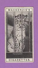MACKENZIE  &  CO. -  VERY  RARE  ANIMAL  CARD  -  LEOPARD  -  1910