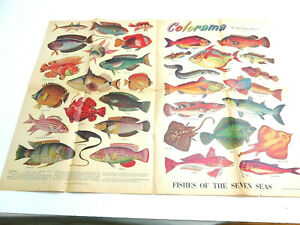1954 PHILADELPHIA INQUIRER COLORAMA ~ FISHES OF THE SEVEN SEAS NEWSPAPER POSTER