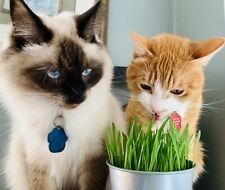 Cat Dog Grass Seeds - Premium Quality Organic, Non-GMO, Kosher Wheatgrass Seeds