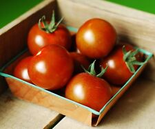 Large Red Cherry Tomato 150 seeds * Non Gmo * ez grow * CombSh F23