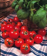 Tomato Gardeners Delight 200 seeds - Vegetables/Fruits