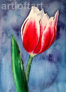 One Tulip  FLOWER ACEO Card Print by A Borcuk