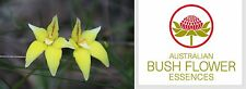 FIORI AUSTRALIANI Yellow Cowslip Orchid CRITICISMO/TENDENZA A GIUDICARE 30 ml