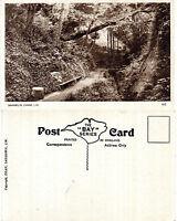 1950's SHANKLIN CHINE SHANKLIN ISLE OF WIGHT UNUSED POSTCARD