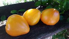 10 graines de tomate Сœur de Boeuf de Russie jaune seeds méth.bio