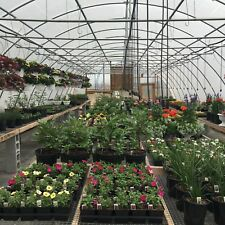NEW 24 X 40 fT. GREENHOUSE KIT!  FOUR SEASON! 12 ft Ceiling ! Free Shipping T-T