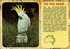 A3196cgt Australia Birds Sulphur Crested Cockatoo Did You Know postcard