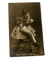 1906 RPPC Cat In a high chair Rotograph Company