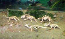 Aquarium Decoration Fish Tank Ornament Dinosaur Discovery Set of 6 pcs D81to86