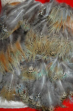 PHEASANT FEATHERS 150 BLUE & RUST LOOSE HAND SELECTED FLYS  ART CRAFTS