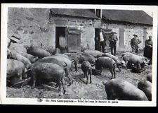 ELEVAGE de COCHONS en CAMPAGNE , FERME cliché 1920-1930
