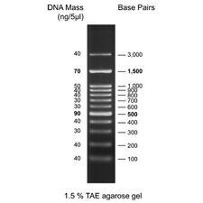 100 bp DNA Ladder (0.5 ml, Ready-To-Use Marker) for Agarose Gel Electrophoresis