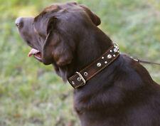 "Genuine Leather Dog Collar Studs 1.5"" wide 19-24"" neck Large XLarge Breeds"