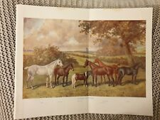 A Group of Ponies - Antique Book Page - 1906
