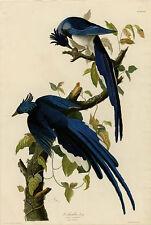 Columbia Jay Audubon Vintage Giclee Canvas Print 20x30