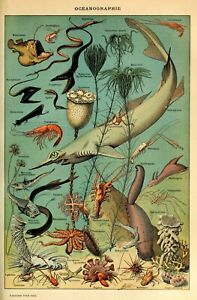 Fish sea 3 A3/A4 identification chart Ocean life animal vintage wall art Poster