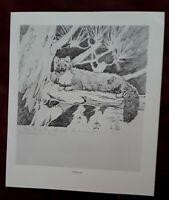 "Frances Lee Jaques-""WOLVERINE & RINGTAIL""1928 2 SIDED Wildlife Art Print 11.5x10"