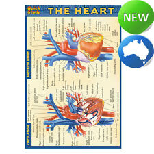 Quick Study Guide - The Heart Laminated Pocket - Nurse|Nursing|Education