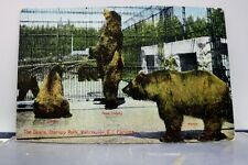 Canada British Columbia Vancouver Stanley Park Bears Postcard Old Vintage Card