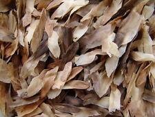 Plumeria Rubra Frangipani Mixed 1000 seeds Fresh Rare