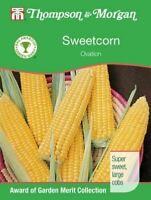 Thompson & Morgan - RHS Vegetables - Sweetcorn Ovation F1 - 25 Seed